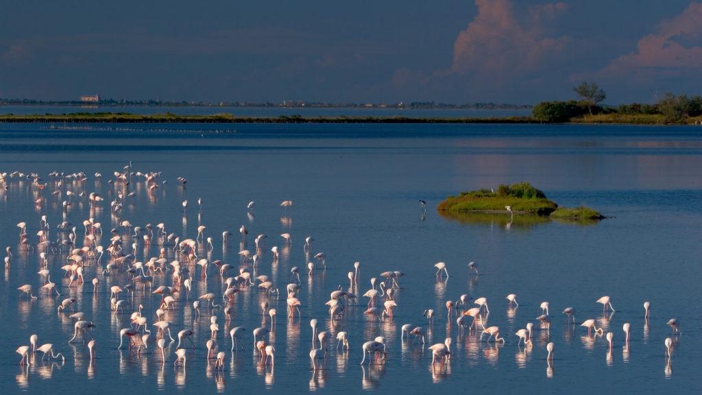 fenicotteri,lago,mare, birdwatching sardegna