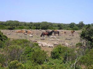 escursione fuoristrada giara gesturi cavallini selvatici