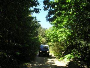 escursione fuoristrada monte limbara sardegna