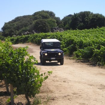 food and wine tour Monti Sardinia