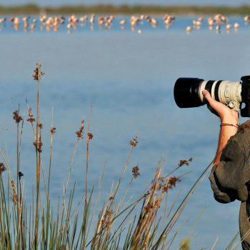 excursions birdwatching sardinia