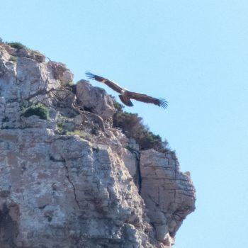 golden eagle sardinia