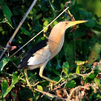 customised excursion birdwatching sardinia