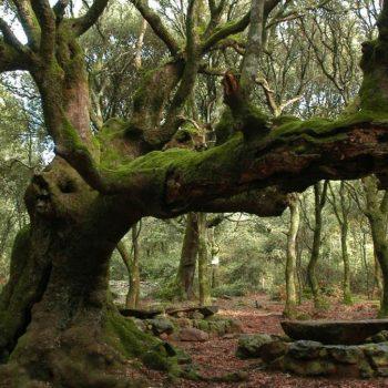 escursione trekking parco is cannoneris lecceto sardegna