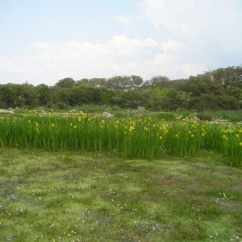 lilies giara gesturi sardinia