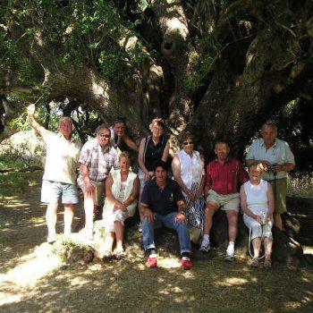 millenary olive trees sardinia