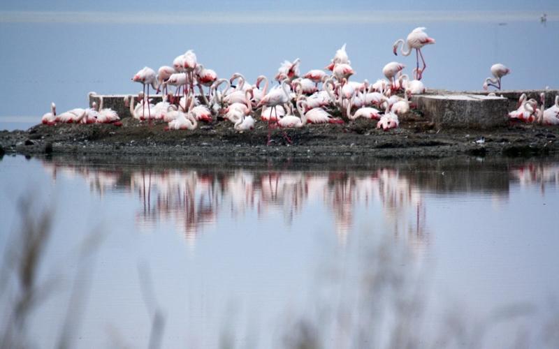 flamingos sardinia